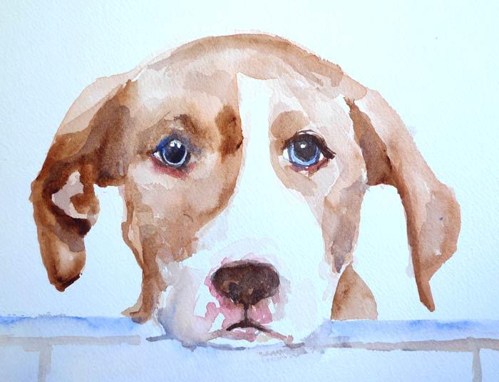 blue-eyed-dog